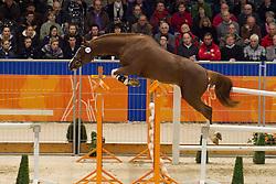 142 - Edgar<br /> KWPN Hengstenkeuring - 's Hertogenbosch 2012<br /> © Dirk Caremans