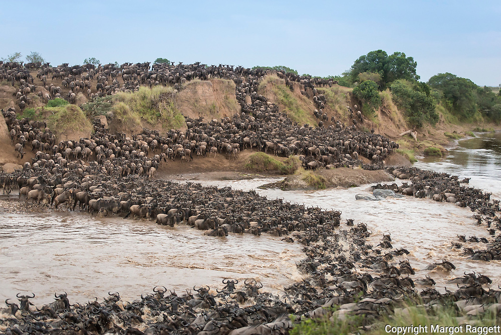 Mara River Crossing 1