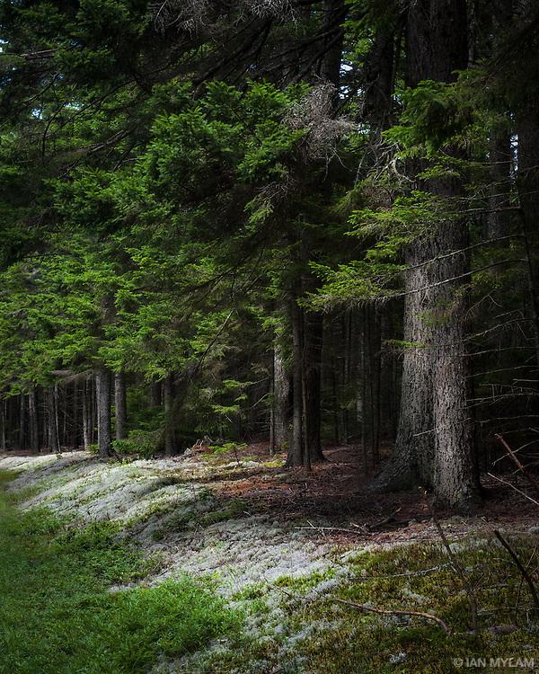 Acadia National Park, Maine, U.S.A.
