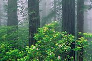 Northern California Coast & Redwoods