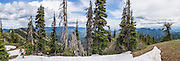 Teanaway Ridge Trail in late May, Wenatchee National Forest, Blewett Pass, Washington, USA. This panorama was stitched from 5 overlapping photos.