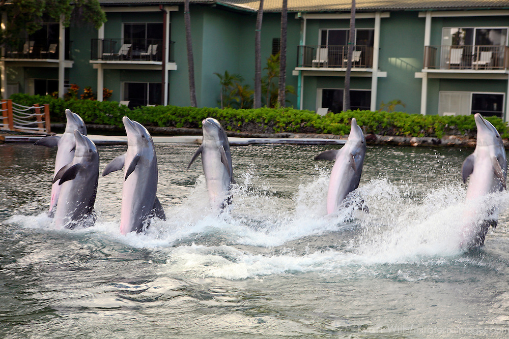 USA, Hawaii, Honolulu. Dolphin Quest Activity at The Kahala Resort.