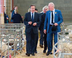 © Licensed to London News Pictures. 23/07/2015. Llanelwedd, Powys, UK.   (Cameron walks with Show Director Harry Fetherstonhaugh through the sheep pens.  David Cameron, Prime Minister of the ,UK, visits the Royal Welsh Show. The Royal Welsh Agricultural Show is hailed as the largest & most prestigious event of it's kind in Europe. In excess of 200,000 visitors are expected this week over the four day show period - 2014 saw 237,694 visitors, 1,033 trade stands & a record 7,959 livestock exhibitors. The first ever show was at Aberystwyth in 1904 and attracted 442 livestock entries. Photo credit: Graham M. Lawrence/LNP
