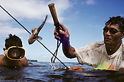 Alatupe Alatupe is spearfishing in a lagoon in Poutasi, Western Samoa, while a neighbor looks on. The Lagavale family lives in a 720-square-foot tin-roofed open-air house with a detached cookhouse in Poutasi Village, Western Samoa. The Lagavales have pigs, chickens, a few calves, fruit trees and a vegetable garden. Material World Project.
