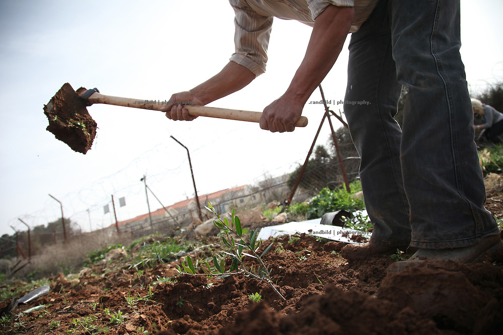 A group of international activists supports palestinian farmer by planting olive trees on their land near a jewish settlement. Constantly in the recent past settlers have claimed the land and destroyed palestinian plantations.