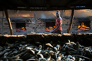 Fish smoking ovens on the beach in the Casamace region of Senegal. Thousands of tons of fish are smoked, salted, dried and exported throughout the region every year, playing a crucial role in the local economy. The coastal zone of Casmance is home to one of Africa's most important mangrove forests. The cutting of wood to feed the fish smoking operations and the effects of climate change on the local ecosystem are severely affecting the mangroves and the forests of the region. Kafountine, Sénégal. 08/11/2014.