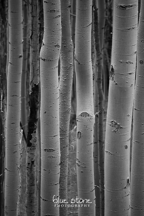 The simplicity of summer aspens in black and white creates a sense of peace amidst nature.<br />