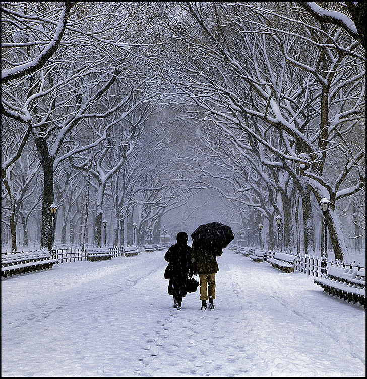 Couple Walking in the Snow, down Poets Walk, Through Bare Tress, Central Park, New York City