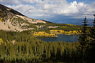 The fall colors of aspen and pine trees on Mt. Sopris near Carbondale, Colorado.