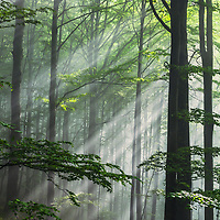 Delicate sunlight in spring forest
