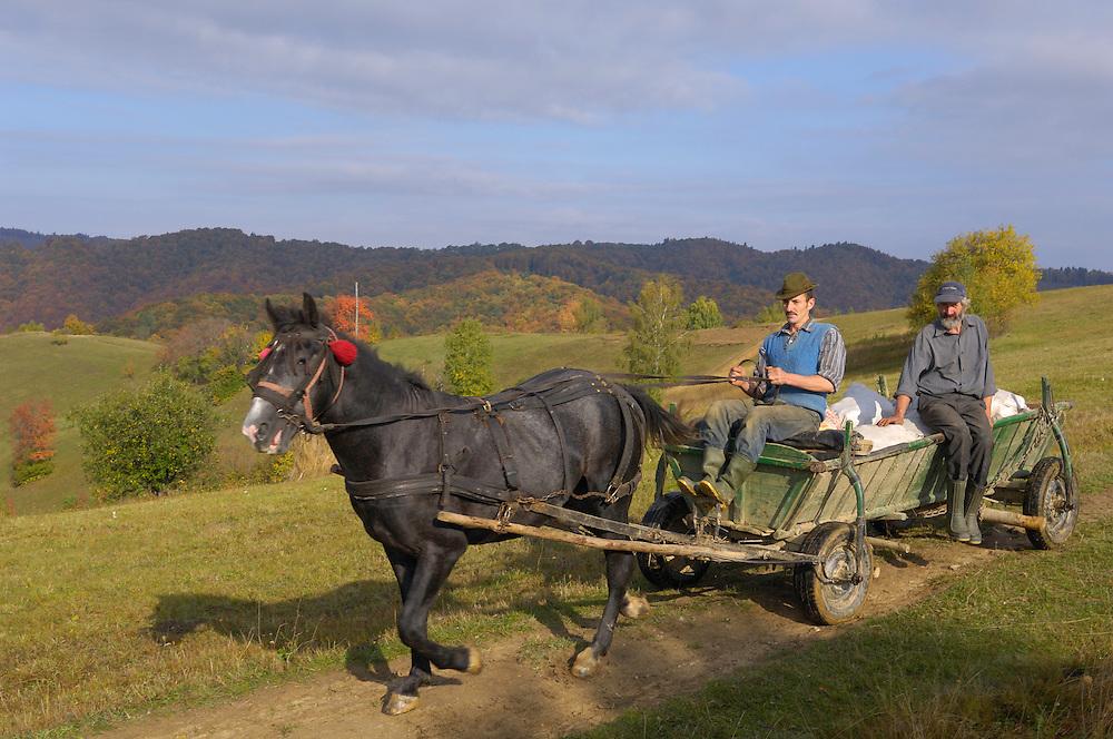 Farmer with traditional horse-drawn carriage, near Zarnesti, Transylvania, Southern Carpathians, Romania