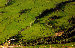 KUPWARA, KASHMIR - AUGUST 18: Rice fields near the Line of Control in the Keran Sector of the Kupwara District in the Indian held state of Jammu and  Kashmir is seen from above, August 18, 2002.  Indian Army troops killed 7 militants early yesterday morning as they attempted to infiltrate from Pakistan along the Line of Control. They carried with them a large quantity of ammunition, arms and jehadi literature.   (Photo by Ami Vitale/Getty Images)