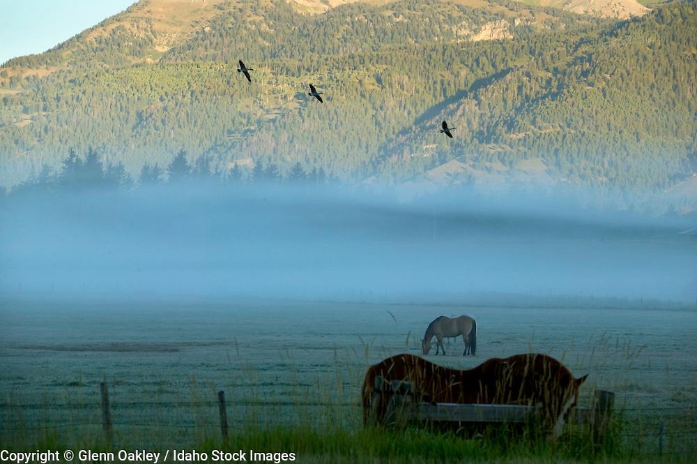 Horses in pasture between Jackson and Teton Village/Wilson, Wyoming