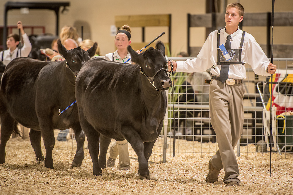 Timonium, Maryland - Young farmer showing his cattle at the 2016 Maryland State Fair.