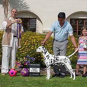 Dalmatian Club of So. Calif 07/2018