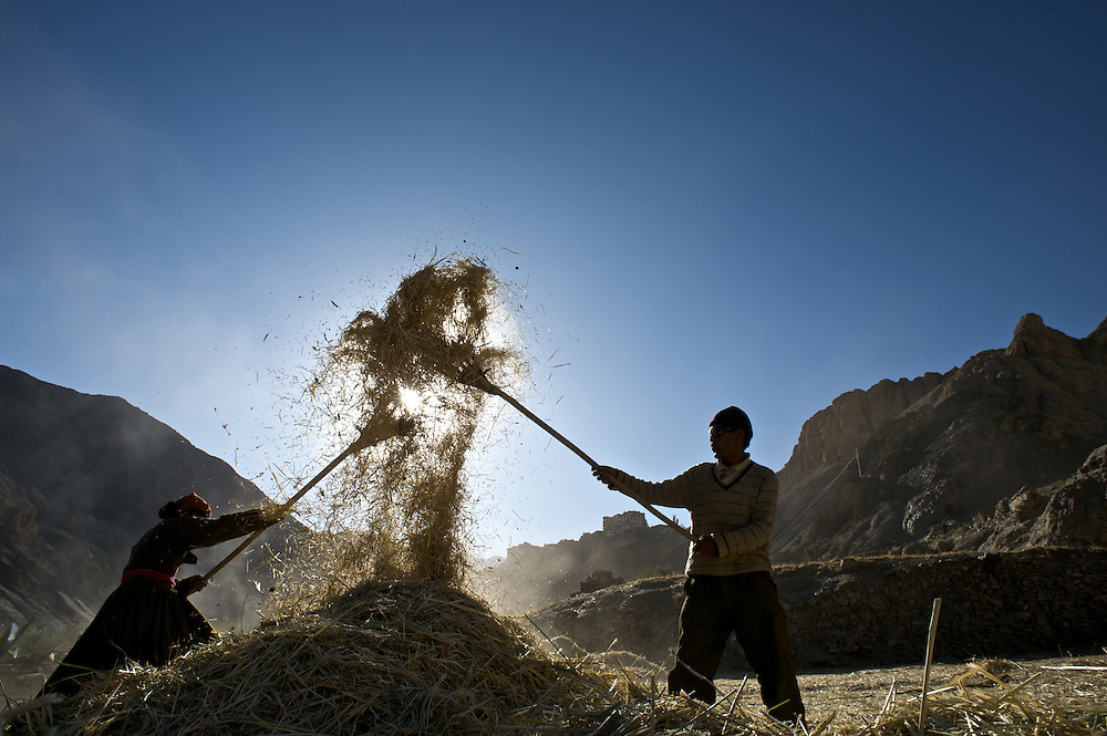 A couple from the Ladakhi village of Lamayuru separate wheat from the chaff on an October morning.