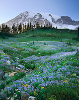 Mount Rainier 14,411¬?ft (4,392¬?m) from wildflower meadows of Paradise, Mount Rainier National Park Washington USA