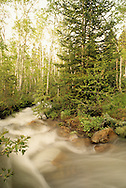 stream in White Pine Canyon, Park City, Utah
