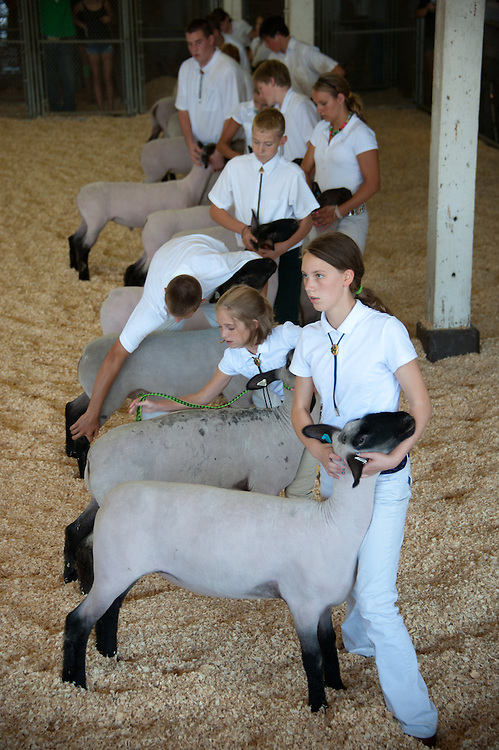 Group of 4-H youth standing in a row inside a pen waiting to be judged with their Suffolk sheep at the Maryland State Fair