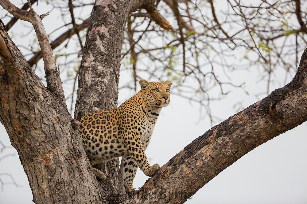 Photos taken during our 2014 Photo Safari to Botswana