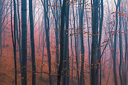 Outstanding misty autumn forest
