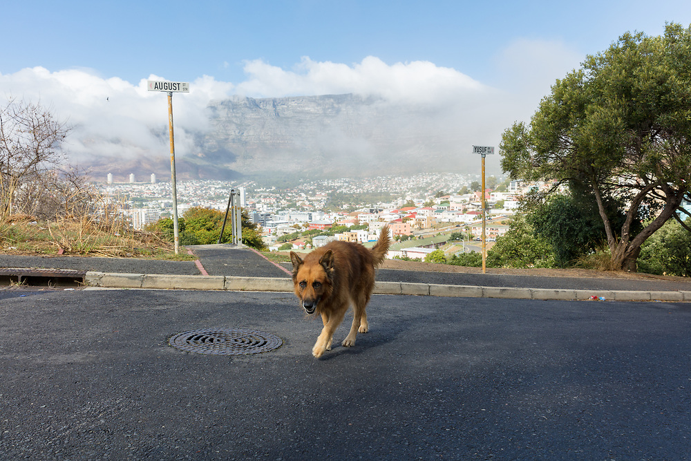 https://Duncan.co/cape-town-dog