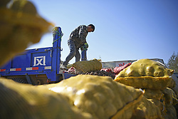 October 4, 2018 - Guyuan, China - A farmer unloads bags of potatoes in Huoshizhai Township of Xiji County of Guyuan City, northwest China's Ningxia Hui Autonomous Region, Oct. 4, 2018. After years of development, industries of processing potato starch, vermicelli and chips have been built in Xiji. (Credit Image: © Wang Peng/Xinhua via ZUMA Wire)
