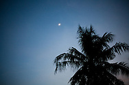 Keutapang Village near Banda Aceh - Aceh, Indonesia  Nov. 2008. A cocnut tree and the moon. With their strong root systems many coconut trees survived the Tsunami with little damage. (Heifer Participant)