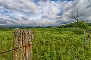 USA, West Virginia, near Davis. A high mountain meadow in the Canaan Valley.