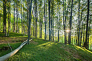 Sunny beech forest in Steneto reserve, Central Balkan NP