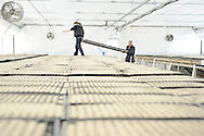 Trays of onion seeds in a Palmer, Alaska-area greenhouse.