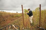 in the Borlotto Gaston bean field