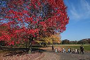 Central Park-Autumn