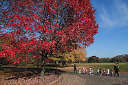 Selects of Autumn in New York