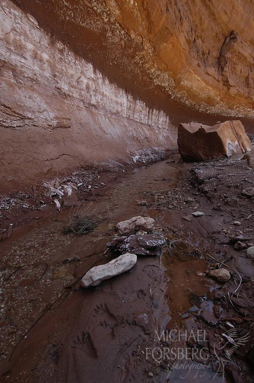 Caprock Escarpment. Texas panhandle..Pole Canyon Ranch. Quitaque, Texas..Raccoon tracks along canyon wall along North or South Pole Creek..