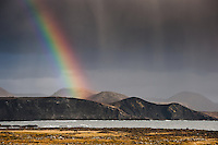 A rainbow over Hraunsvík, east of Grindavík on Reykjanes Peninsula, Iceland. Horses grazing on a field. Dark grey sky in contrast with rainbow.