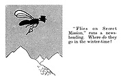 """""""Flies on secret mission,"""" runs a news-heading. Where do they go in winter-time?"""