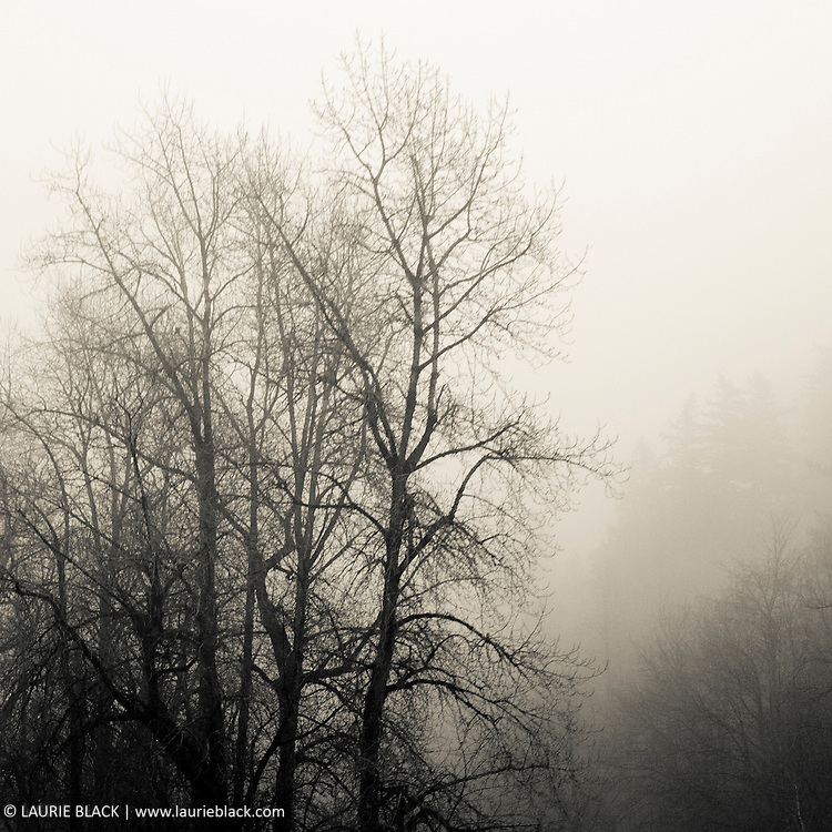 Misty Columbia Gorge landscape