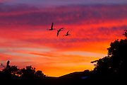 Sunset over Bellmore, Long Island. Those are geese flying in the background.