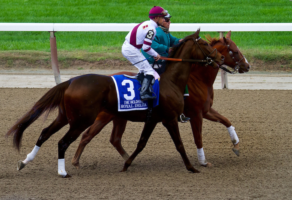 """Royal Delta"", with Mike Smith aboard, in the post parade before the Beldame, which she won in 2012."