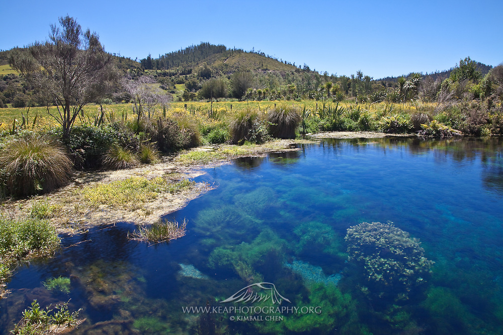 Pupu springs, New Zealand