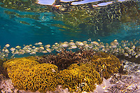 Healthy reefs in the marine preserves showcase Guam beautiful shallow protected areas in Tumon Bay and Piti Bay (June 2011)