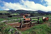 Parker Ranch, Waimea, Kamuela, Island of Hawaii<br />