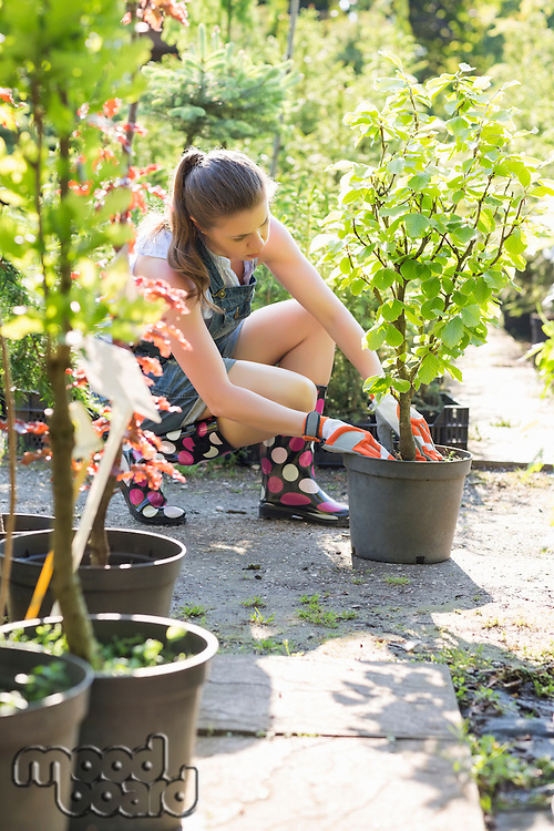 Full length of woman planting at garden center