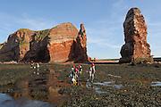 Studenten des Alfred-Wegener-Institut (AWI) erforschen das Felswatt vor Helgoland