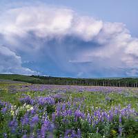 blackfeet reservation storm over lupine meadow