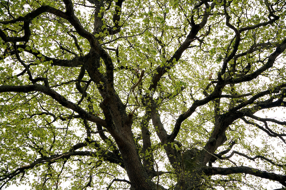 tree with sprouting fresh green leaves during spring season
