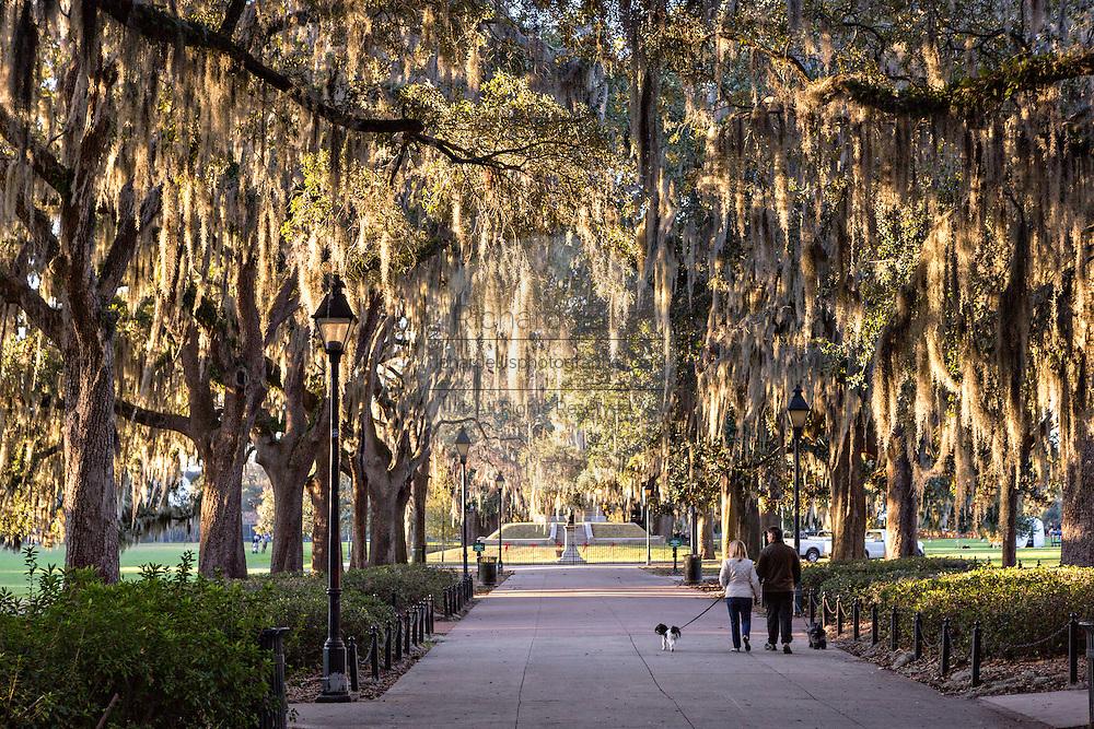 Live Oak tree tunnel in Forsyth Park Savannah, GA.