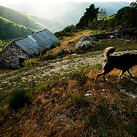 Guard dog at village in the Ancares mountains