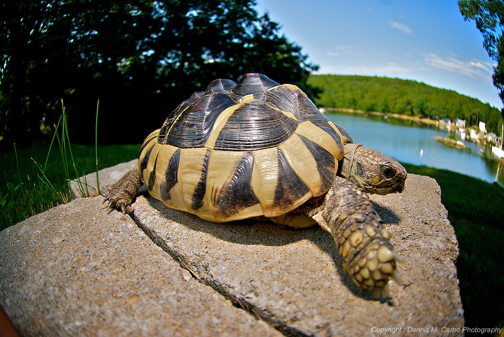 Mr Turtle